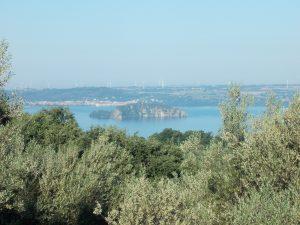 Ulivi con vista Lago di Bolsena